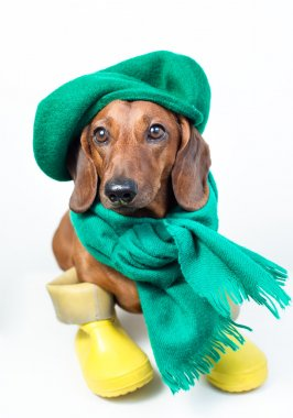 Dog in green scarf