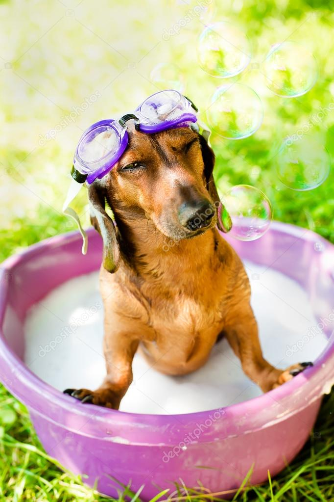 The dog takes a summer bath