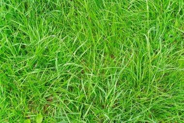 Green grass texture close up stock vector