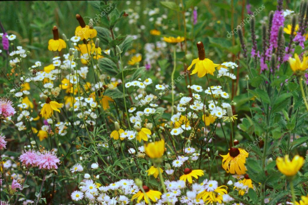 Prairie Flower Mix
