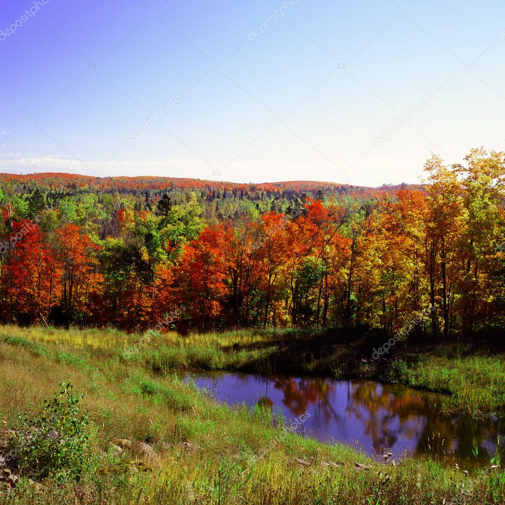 Herbst Farbpalette Superior National Forest Stockfoto C Jeff16wc