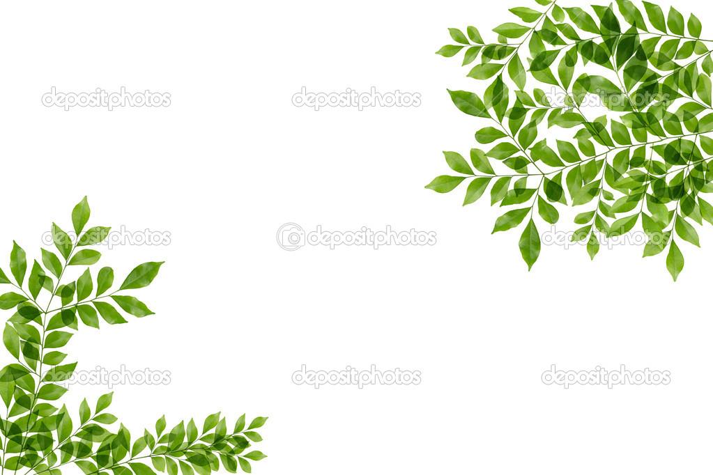 Hojas De Color Verde Marco Aislado Sobre