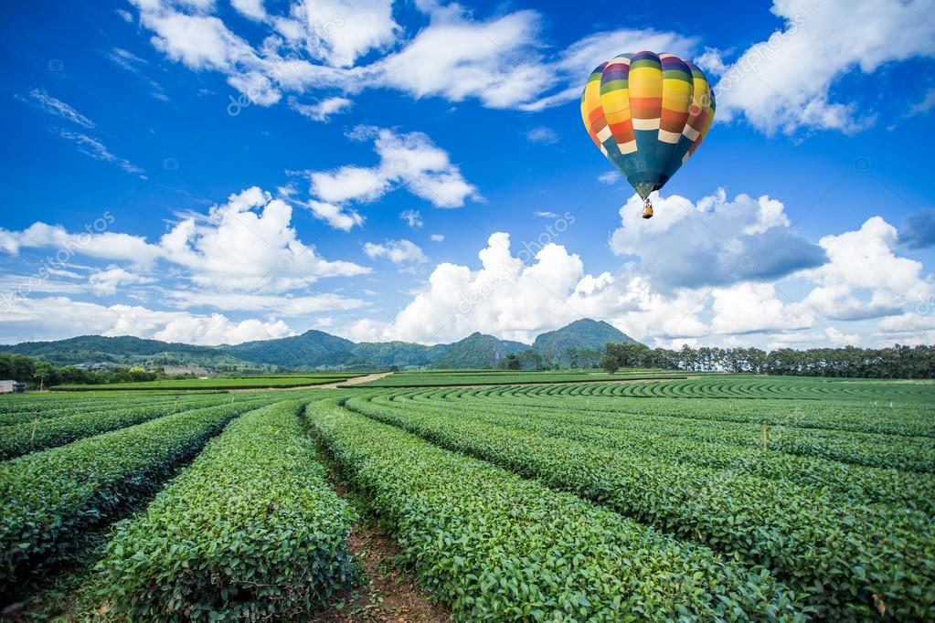 Hot air balloon over tea plantations with mountain background