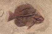 Fotografie Fischfossil