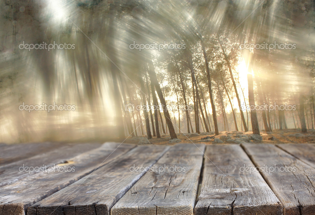 Wood boards and summer light among trees. textured image. filtered.