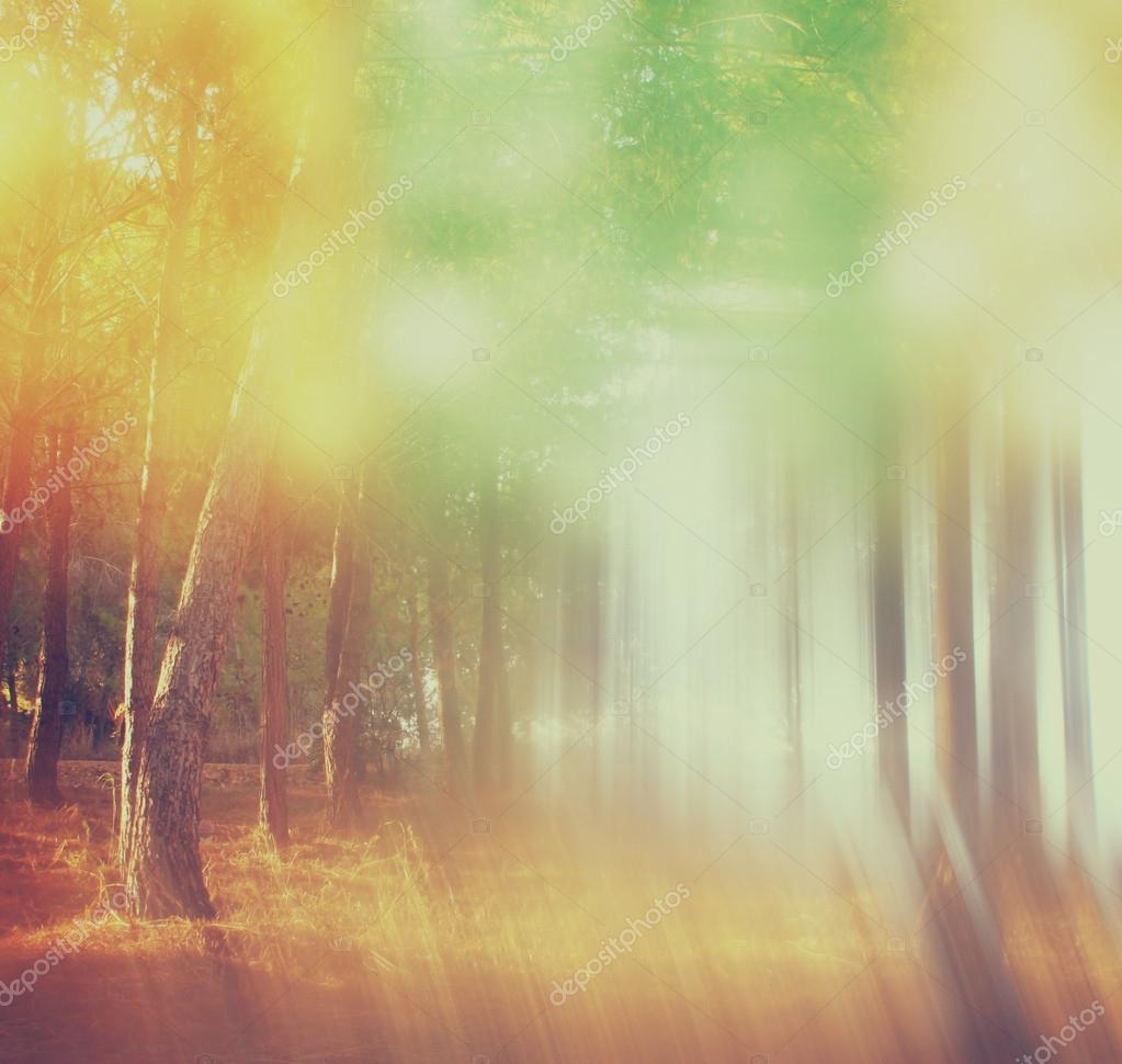 Blurred abstract photo of light burst among trees and glitter bokeh lights. filtered image