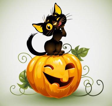 Black cat on pumpkin.