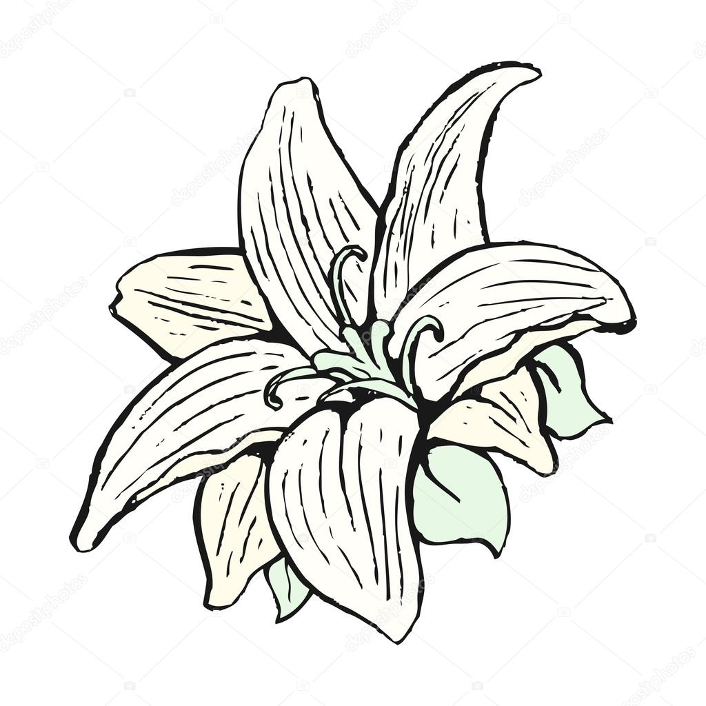Cartoon lily flower stock vektor lineartestpilot 14928341 cartoon lily flower stock vektor izmirmasajfo