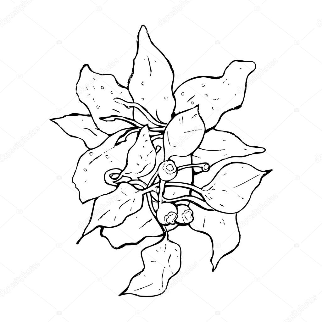 Drawing of lily flowers stock vector lineartestpilot 20074635 drawing of lily flowers stock vector izmirmasajfo