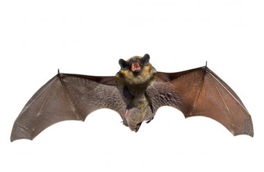 A close up of the small bat