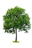 isolierter Baum