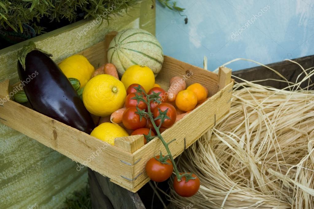 Biological vegetable case