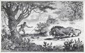 Fotografie ein Betschuana-Stamm-Mann findet seinen Bruder, von einem Löwen gefressen