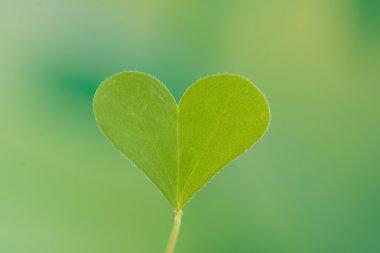 Heart shape Clover leaf