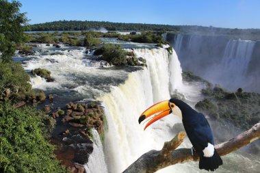 Giant toucan bird in front of Iguazu waterfalls