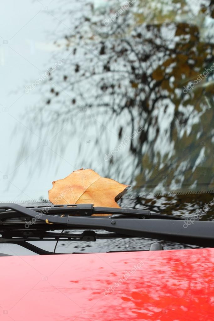 Fallen autumn leaves on red car windshield