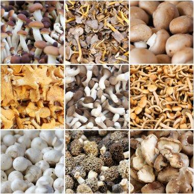 Mushroom from market collage
