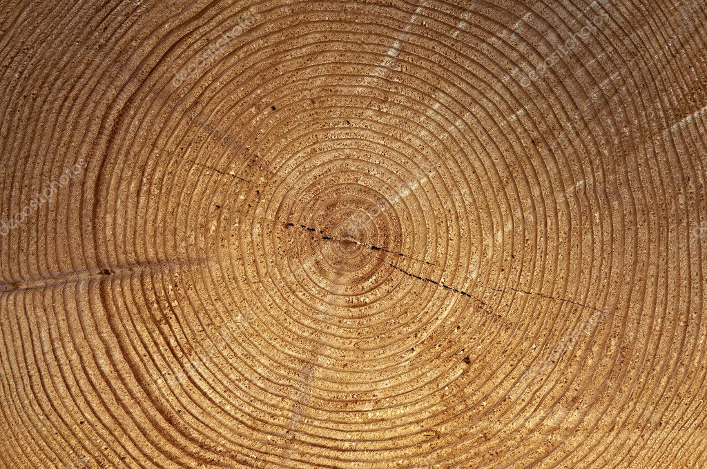 Wood close up tree rings