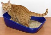 Fotografie Kätzchen in blau Kunststoff Wurf Katze