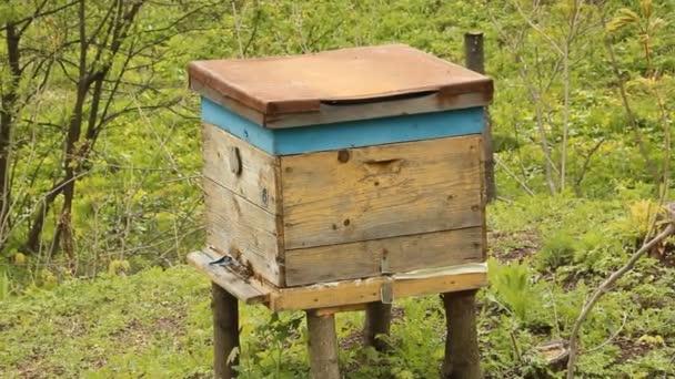 méhkasa