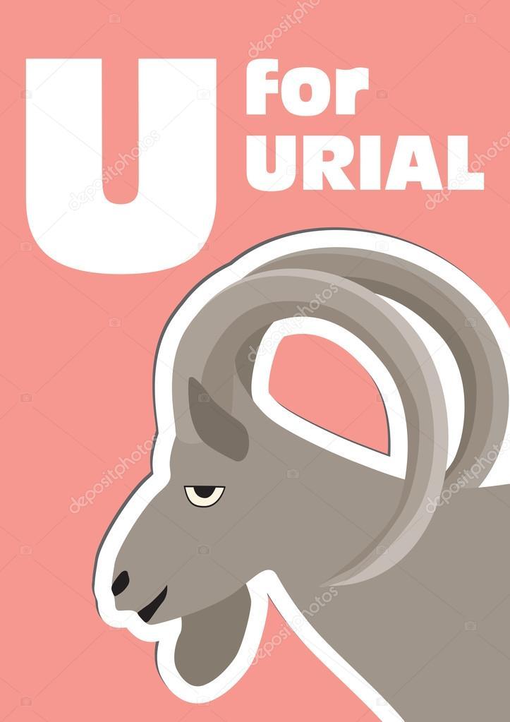 urial u letter children animal alphabet in vector.html