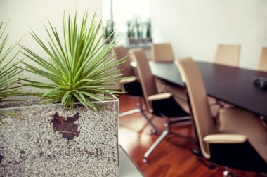 Green spiky plant in an empty office, conference room
