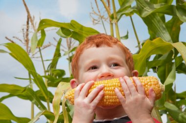 Young boy eating fresh corn