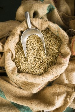 Raw Coffee Seeds Bulk Scoop Burlap Bag Agriculture Bean