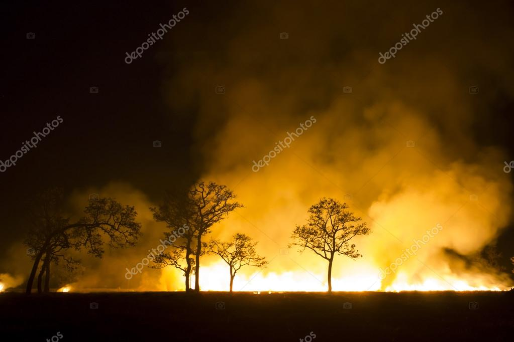 Burning forest ecosystem is destroyed