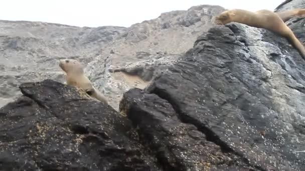 Fókák a rock