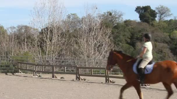 dívka na koni koně