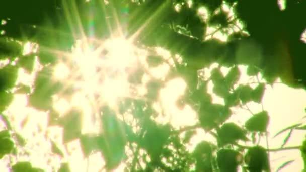 slunce svítí přes listy
