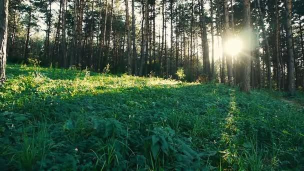 lesní sekvence