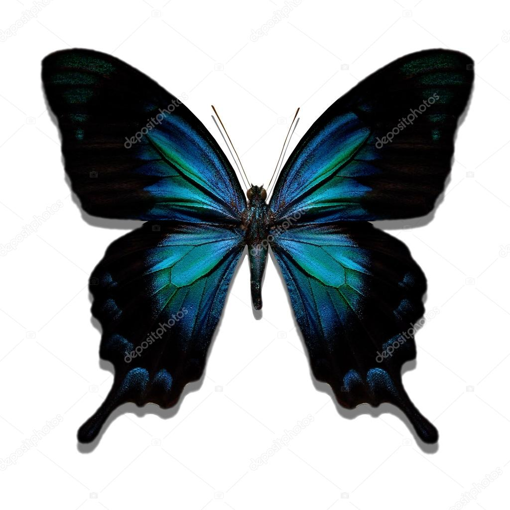 Blue, shiny butterfly