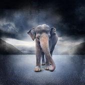 Magányos elefánt