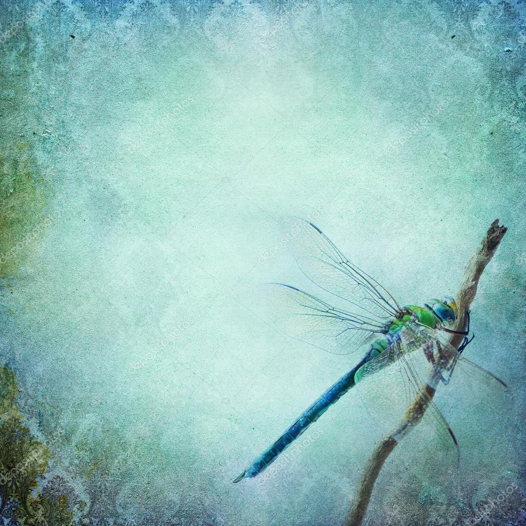 Vintage shabby chic background with dragonfly