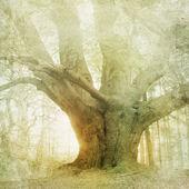 ročník Lesní krajina pozadí