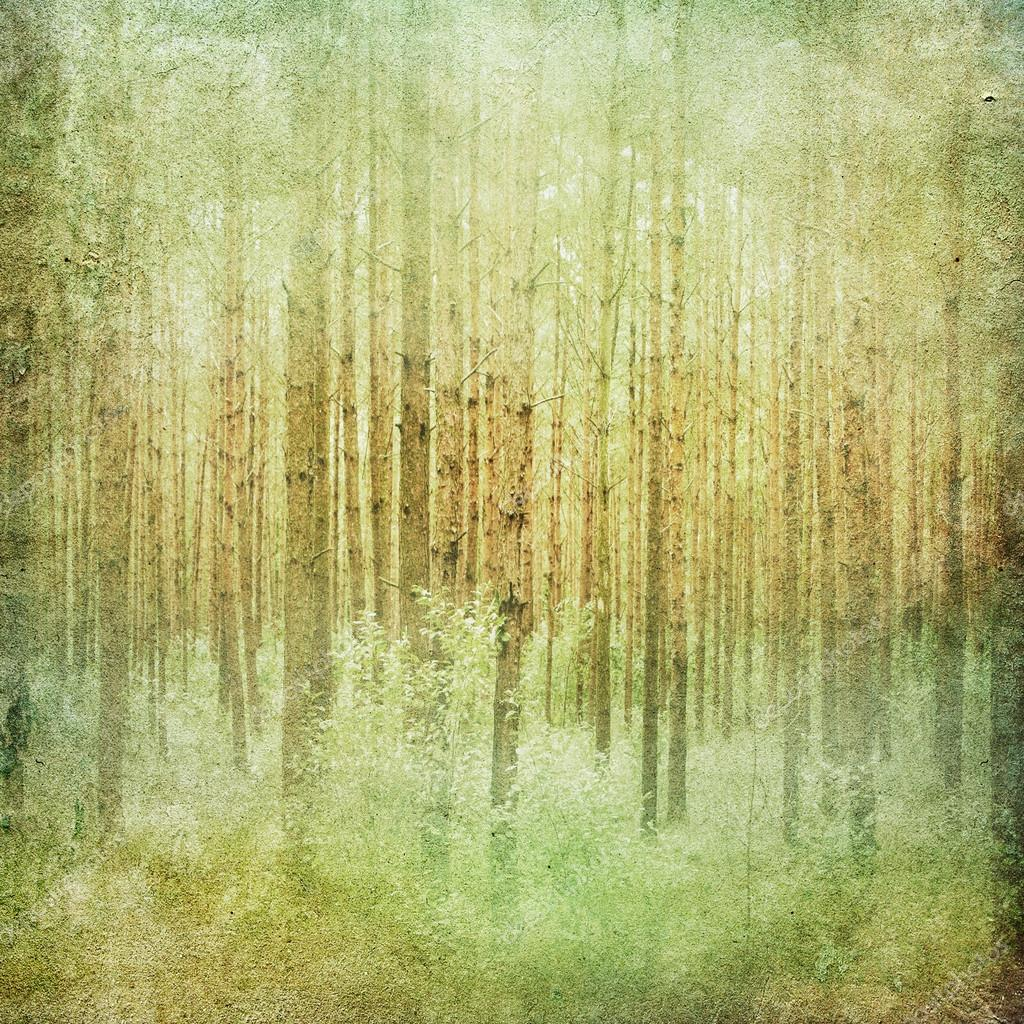 Фотообои Vintage forest landscape background