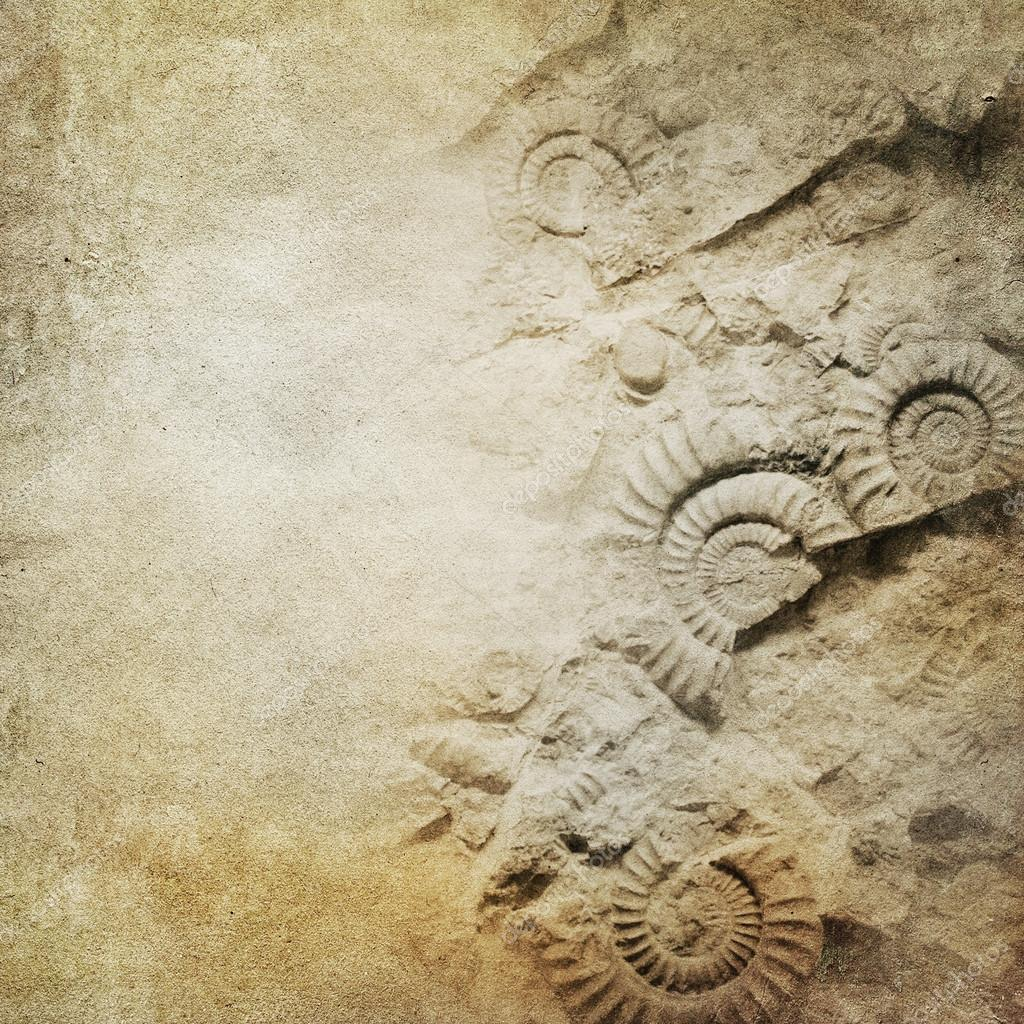 Vintage paper background with fossils