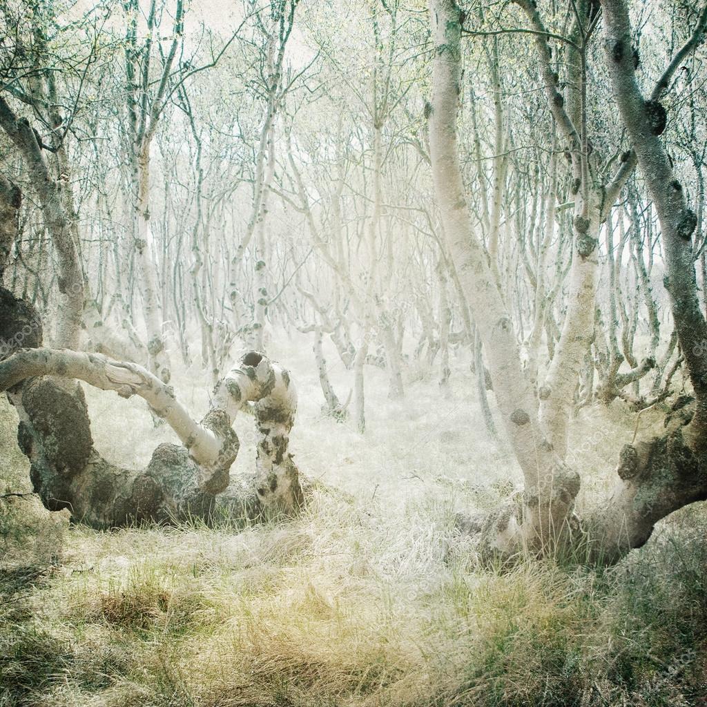 Фотообои Vintage forest background