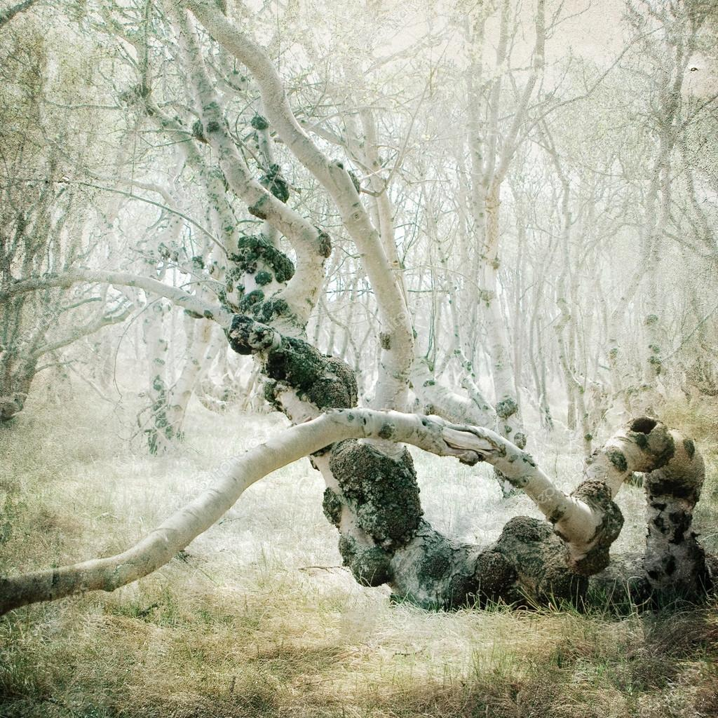 Фотообои Vintage forest background