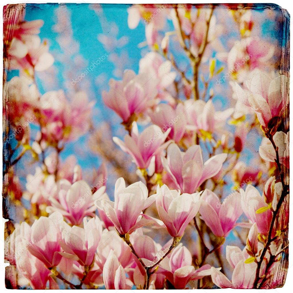 Dreamy magnolia background