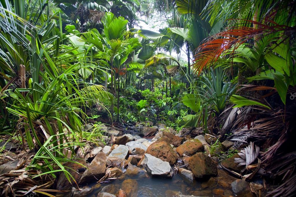 paesaggio della giungla con cascata foto stock piolka 43300079. Black Bedroom Furniture Sets. Home Design Ideas
