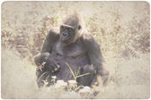 Photo Gorilla in a meadow background