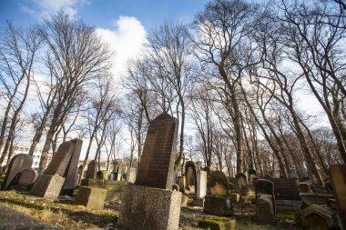 New Jewish Cemetery in Krakow