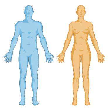 Female male body shapes – human body outline - anterior view - full body