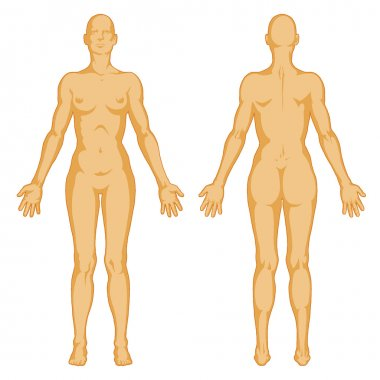 Female body shapes – human body outline - posterior and anterior view - full body
