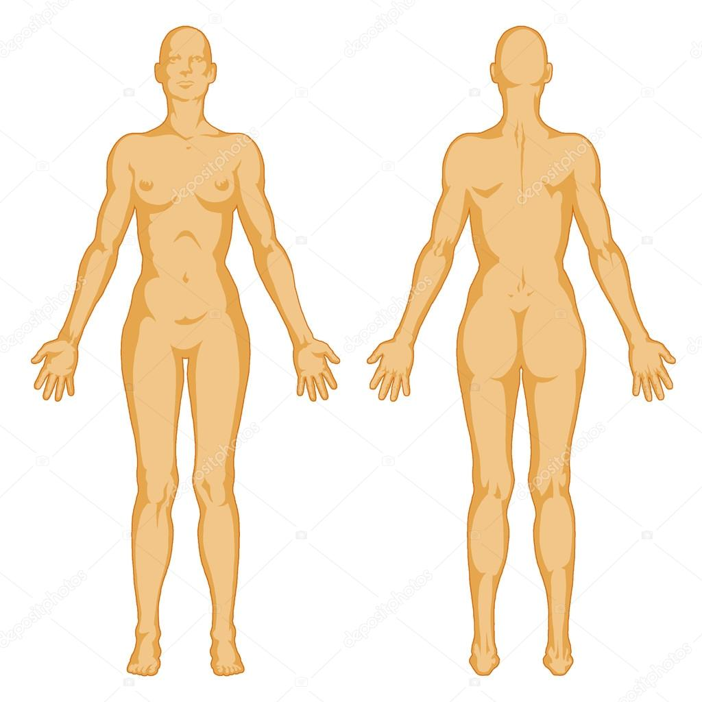 Female body shapes – human body outline - posterior and anterior ...