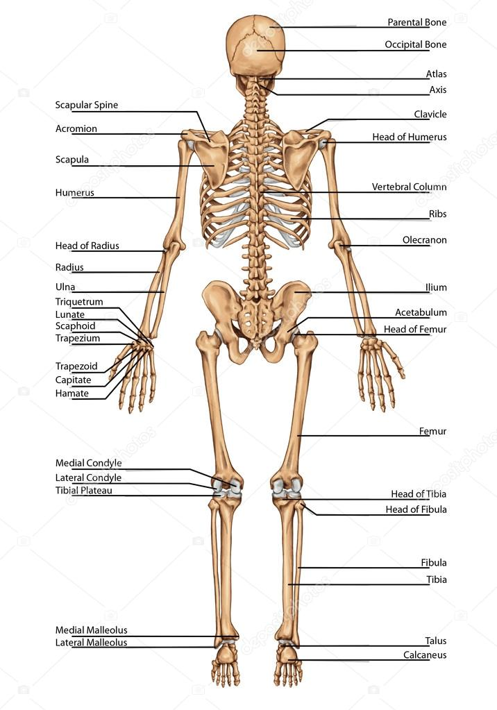 avalancha de plansha schelet 1 — Foto de stock © stihii #22505133