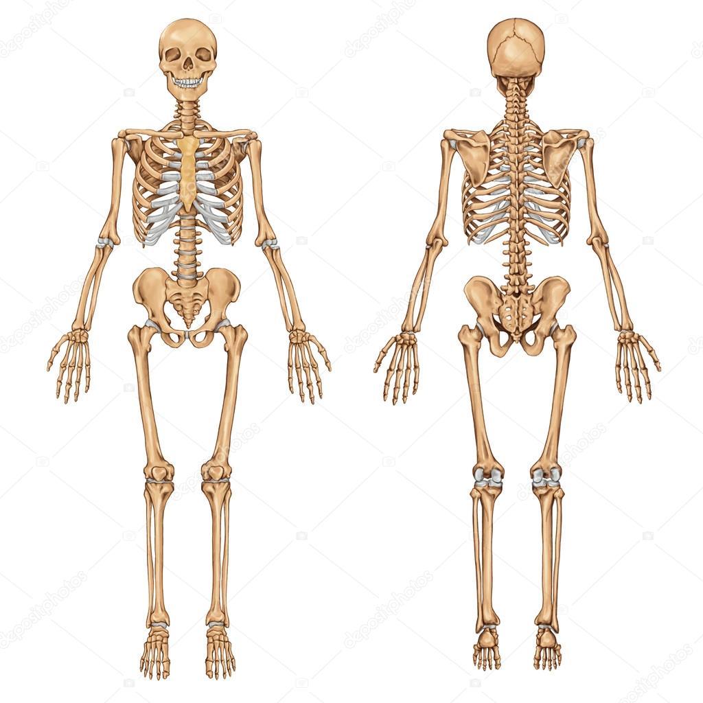 oleada de schelet fatza 1 — Fotos de Stock © stihii #22505139